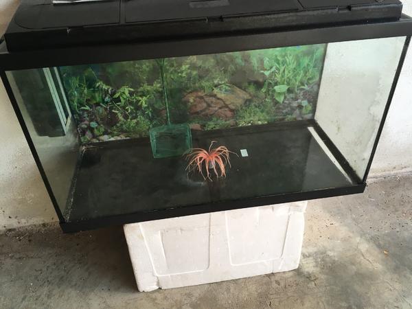 Aquarium live gebraucht kaufen nur 2 st bis 70 g nstiger for Aquarium gebraucht