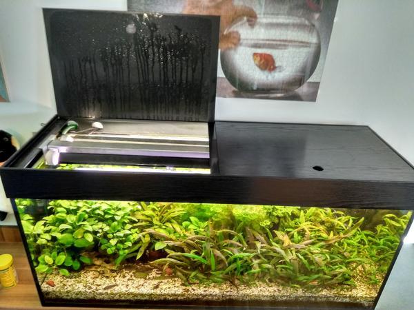 Aquarium becken gebraucht kaufen nur 2 st bis 65 g nstiger for Aquarium gebraucht