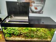 Aquarium und 2
