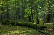 Aussteiger Sucht Grundstück, ((