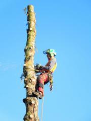 Baumpflege Problembaumfällung Schneebruch