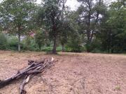 Baumwiese zu verpachten