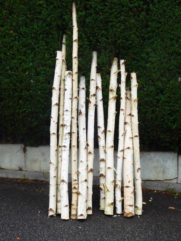 Birkenst mme kaufen interieur und wohndesign ideen - Birkenstamme als deko ...