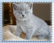 BKH Katzenbabys