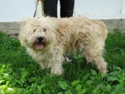 Camino - lebenlustiger Hund !