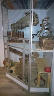 Chinchillas mit Käfig