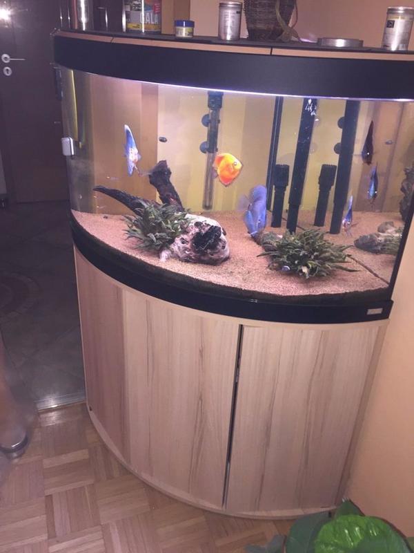 eck aquarium kaufen / eck aquarium gebraucht - dhd24, Hause ideen