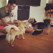Familiäre Hundebetreuung Hundepension