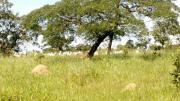 Fazienda Farm