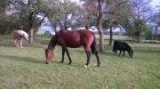 Gnadenbrod Pferde suchen
