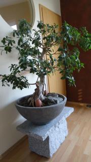 Pflanzen In Neuler Günstig Kaufen Quokade