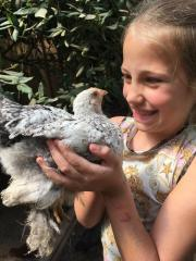 Hühner und Hähne