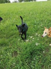 Jasper: Traumhund sucht