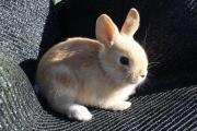 Kaninchen / Häschen / Hase