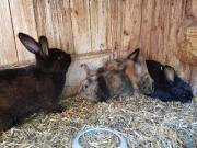 Kaninchen / Hasen Babys