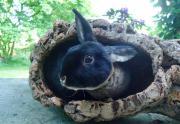 Kaninchen Nachwuchs , 1