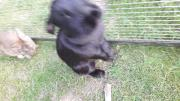 Kaninchen Stallhsin weiblich