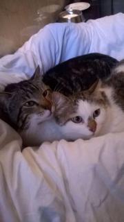 Katzen Tommy & Bella