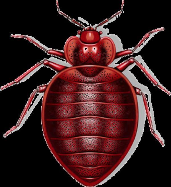 KILLTEC Ungezieferbekämpfungsmittel Insektenbekämpfungsmittel Kammerjäger Wien