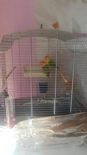 kleine Papagei