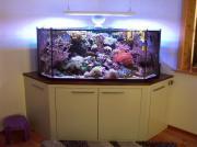 Komplettaquarium Meerwasser 600