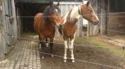 Koppel oder Pferdeboxen