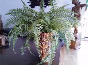 Kunstpflanze Kunstbaum Künstliche