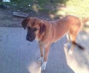 Lara,Tierschutzhund aus