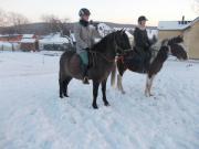 Lewitzer-Pony