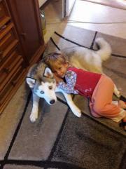Liebe Husky zum