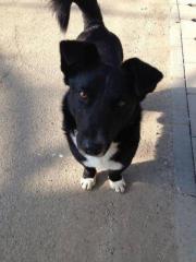 Nicholas, 2jähriger Mischlingshund,