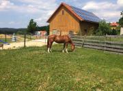 Offenstall/Pferdenox mit