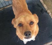 Penny, trauriges Hundemädchen