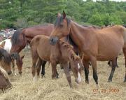 Pferde in Not