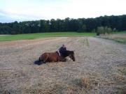 Pferdeausbildung und Reiterausbildung