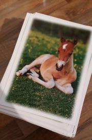 Pferdepostkarten