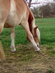 Pony sucht Reiter
