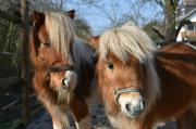 Ponybetreuung
