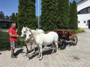 Ponykutsche - Jagdwagen
