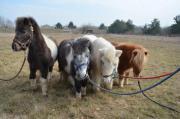 Ponyreiten für Kinder