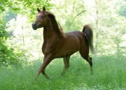 pferde in sigmaringen kaufen und verkaufen bei. Black Bedroom Furniture Sets. Home Design Ideas