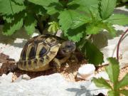 Schildkrötenshop Terratuga - Alles