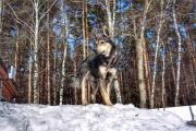 Schöner Hund Jack