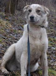 Schüchterner Axel sucht hundeerfahrene liebevolle