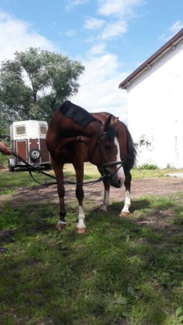 sport spring pferd in egling pferde kaufen und verkaufen ber private kleinanzeigen. Black Bedroom Furniture Sets. Home Design Ideas