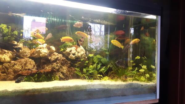 aquarium barsche kleinanzeigen tiermarkt deinetierwelt. Black Bedroom Furniture Sets. Home Design Ideas