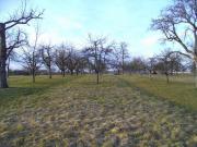 Suche nach einem Baumwiese-Grundstück auch