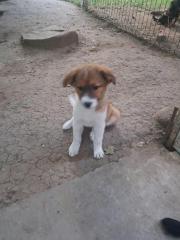 Süße kleine Faya