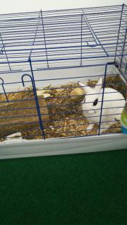 Süßes Kaninchen sucht