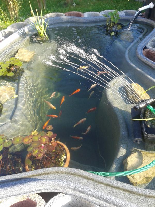 Teich ohne fische garten design ideen um ihr zuhause zu for Teich reinigen fische